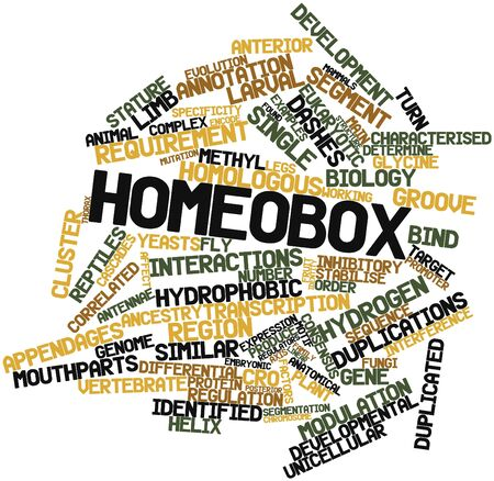 Abstract word cloud for Homeobox with related tags and terms Stock Photo