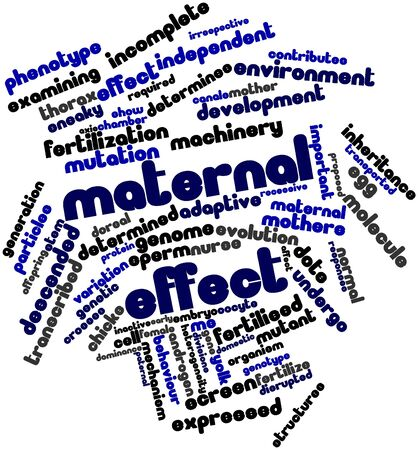 Abstract word cloud for Maternal effect with related tags and terms Stock Photo - 17021947