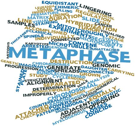 Abstract word cloud for Metaphase with related tags and terms Stock Photo - 17024586