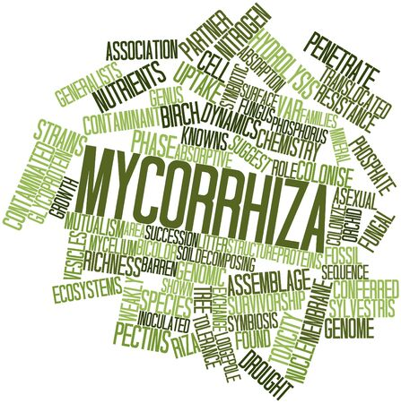 vesicles: Abstract word cloud for Mycorrhiza with related tags and terms Stock Photo