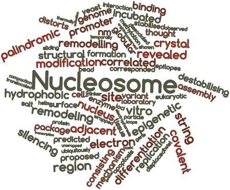 recombinant: Word cloud astratto per Nucleosome con tag correlati e termini Archivio Fotografico