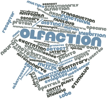 micrometers: Abstract word cloud for Olfaction with related tags and terms
