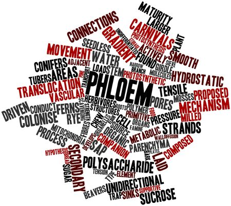organelles: Abstract word cloud for Phloem with related tags and terms Stock Photo