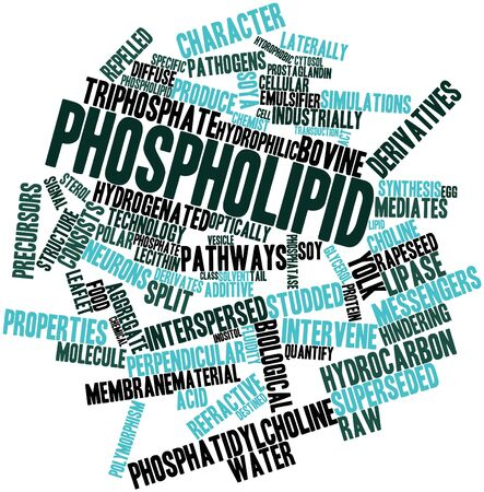 stimuli: Abstract word cloud for Phospholipid with related tags and terms Stock Photo