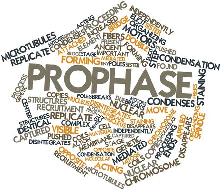 spindle: Abstract word cloud for Prophase with related tags and terms Stock Photo