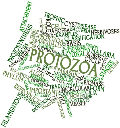 phylum: Abstract word cloud for Protozoa with related tags and terms
