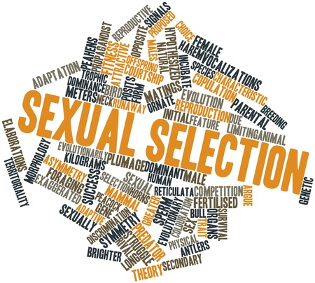 Abstract word cloud for Sexual selection with related tags and terms Stock Photo