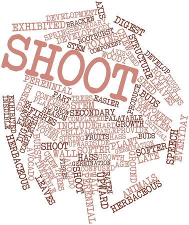 Abstract word cloud for Shoot with related tags and terms Stock Photo