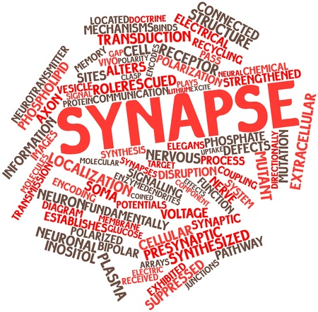 localization: Abstract word cloud for Synapse with related tags and terms Stock Photo