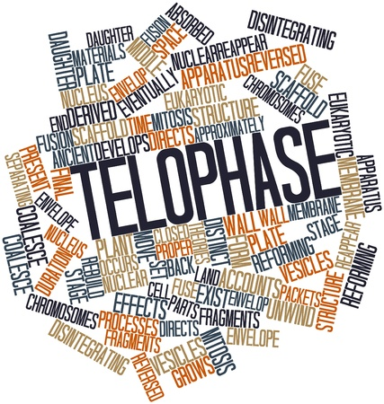 Abstract word cloud for Telophase with related tags and terms Stock Photo - 17029570