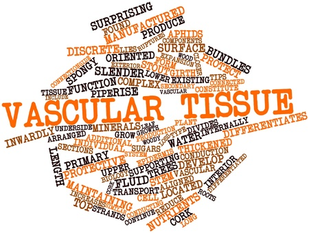 Abstract word cloud for Vascular tissue with related tags and terms photo