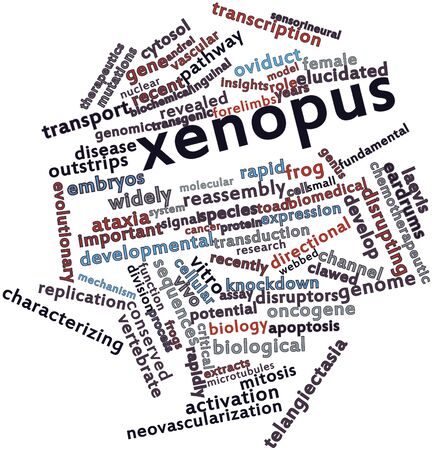 microtubules: Abstract word cloud for Xenopus with related tags and terms