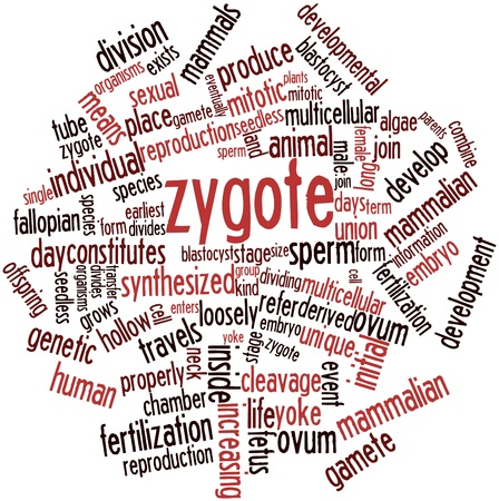 blastocyst: Abstract word cloud for Zygote with related tags and terms