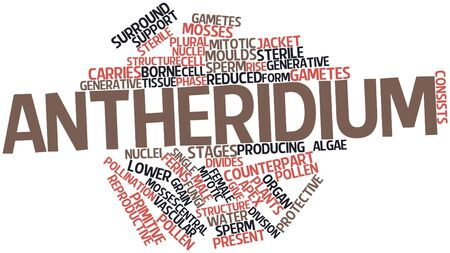 male sperm: Abstract word cloud for Antheridium with related tags and terms