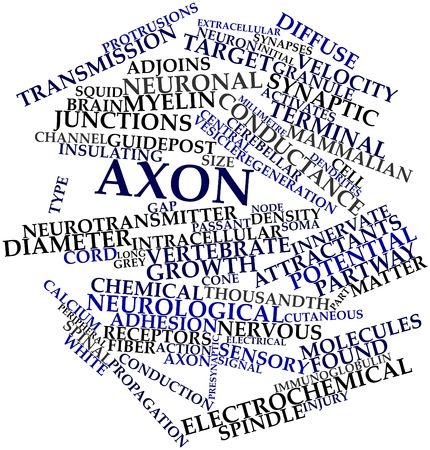 extracellular: Abstract word cloud for Axon with related tags and terms Stock Photo