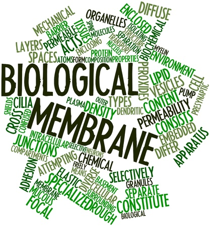 Abstract word cloud for Biological membrane with related tags and terms photo