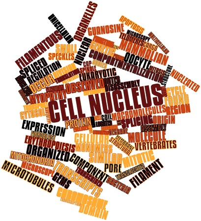 organelles: Abstract word cloud for Cell nucleus with related tags and terms