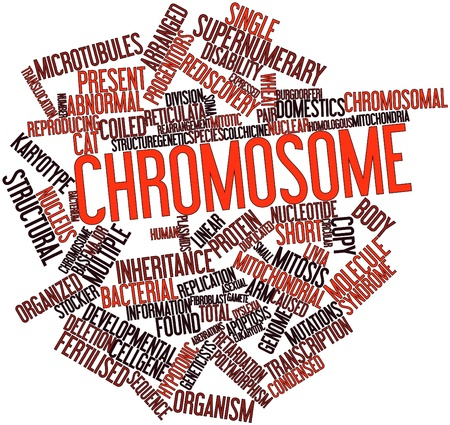 Abstract word cloud for Chromosome with related tags and terms photo