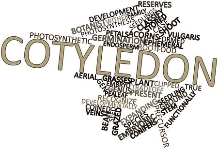 embryonic development: Abstract word cloud for Cotyledon with related tags and terms Stock Photo