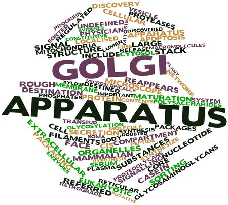 organelles: Abstract word cloud for Golgi apparatus with related tags and terms
