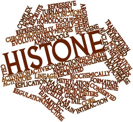 lineage: Abstract word cloud for Histone with related tags and terms
