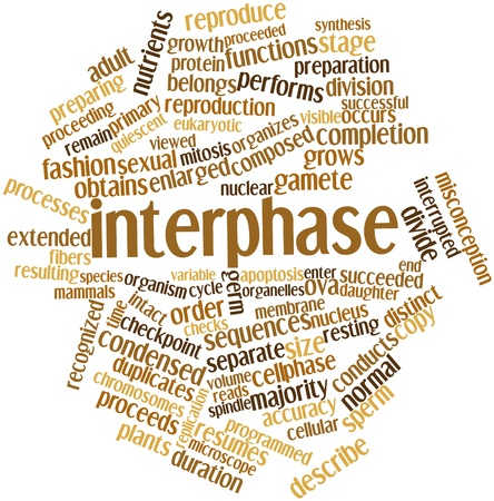 Abstract word cloud for Interphase with related tags and terms