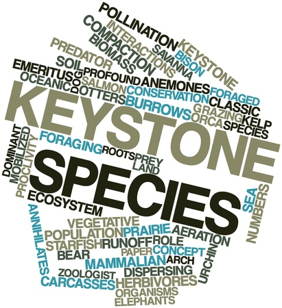 deployed: Abstract word cloud for Keystone species with related tags and terms Stock Photo