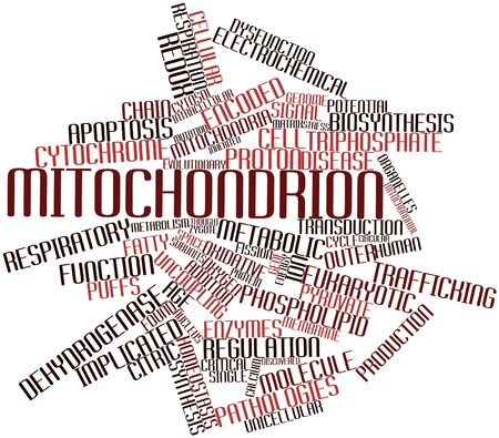 organelles: Abstract word cloud for Mitochondrion with related tags and terms Stock Photo