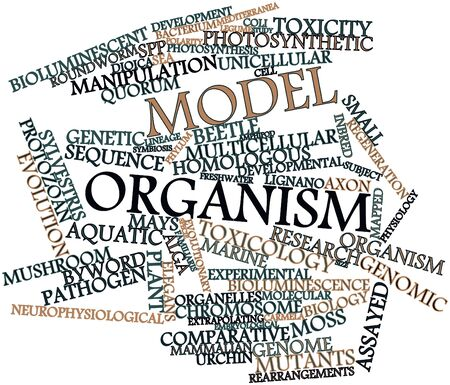 assays: Abstract word cloud for Model organism with related tags and terms Stock Photo