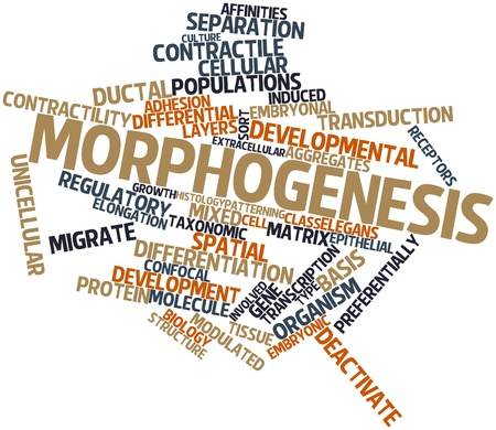 developmental biology: Abstract word cloud for Morphogenesis with related tags and terms