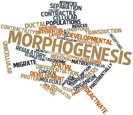 elongacion: Nube palabra abstracta para Morfogénesis con etiquetas y términos relacionados