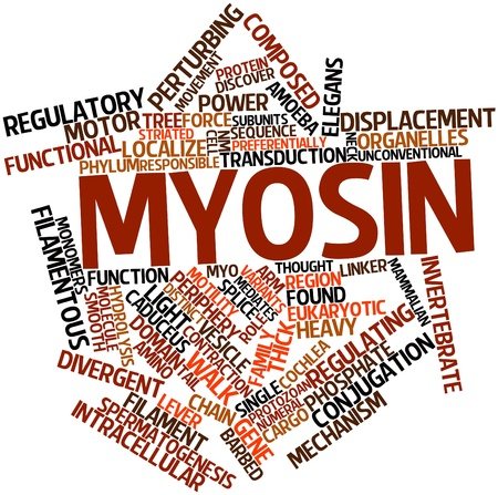 linker: Abstract word cloud for Myosin with related tags and terms