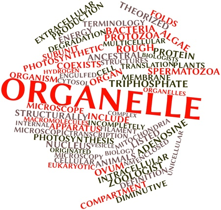 division: Abstract word cloud for Organelle with related tags and terms