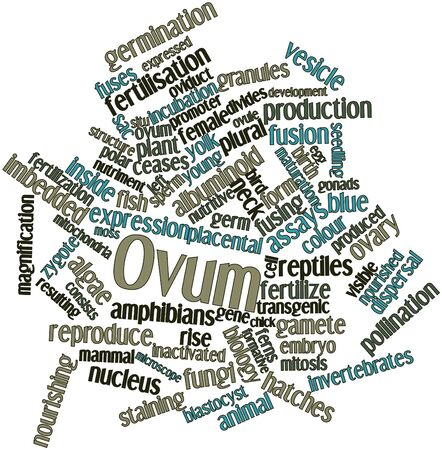 assays: Abstract word cloud for Ovum with related tags and terms