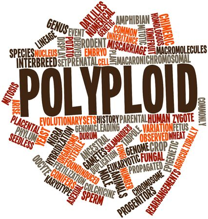 Abstract word cloud for Polyploid with related tags and terms Stock Photo