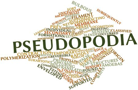 subunits: Abstract word cloud for Pseudopodia with related tags and terms