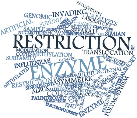 enzyme: Abstract word cloud for Restriction enzyme with related tags and terms