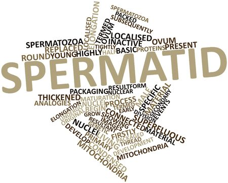 elongation: Abstract word cloud for Spermatid with related tags and terms