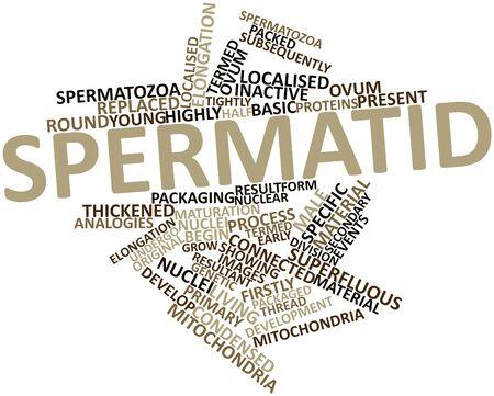 espermatozoides: Nube palabra abstracta para espermátida con etiquetas y términos relacionados Foto de archivo