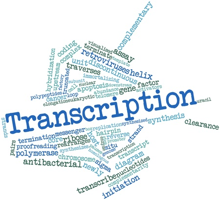 Abstract word cloud for Transcription with related tags and terms