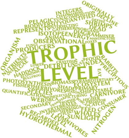 detritus: Abstract word cloud for Trophic level with related tags and terms