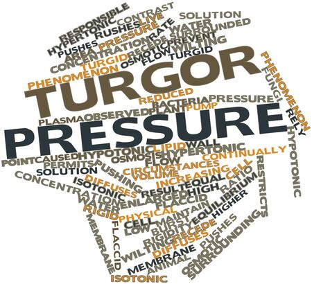 circumstances: Abstract word cloud for Turgor pressure with related tags and terms Stock Photo