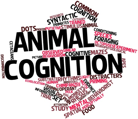 Abstract word cloud for Animal cognition with related tags and terms