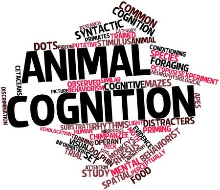 Nube palabra abstracta para la cognici�n animal con las etiquetas y t�rminos relacionados Foto de archivo - 17141906