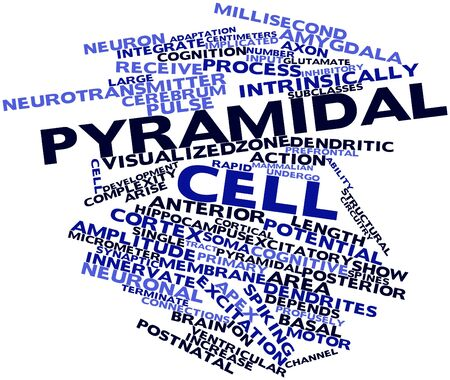 lineage: Abstract word cloud for Pyramidal cell with related tags and terms Stock Photo