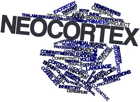 prefix: Abstract word cloud for Neocortex with related tags and terms