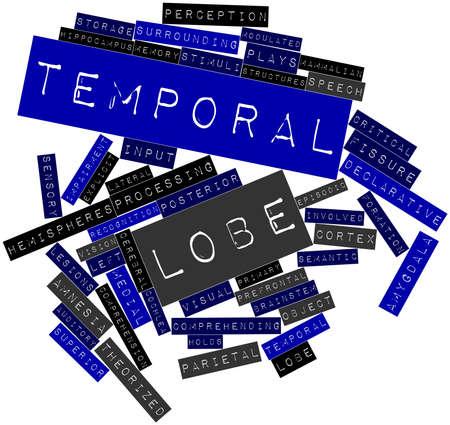 declarative: Word cloud astratto per il lobo temporale con tag correlati e termini Archivio Fotografico