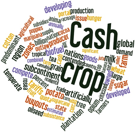 Abstract word cloud for Cash crop with related tags and terms Stock Photo - 17398223
