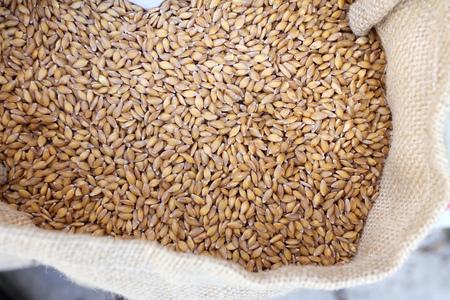 Einkorn Wheat. Organic Einkorn wheat grains in a bag on a farmers market