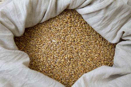 Wheat. Organic Einkorn wheat grains in a bag on a farmers market Stockfoto